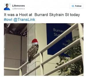 Hoot Burrard