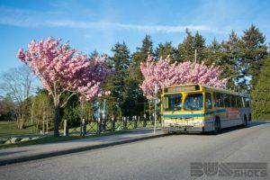 Cherry blossoms? Check. Big yellow bus? Check.